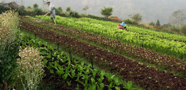agricultura ecologica 620-300