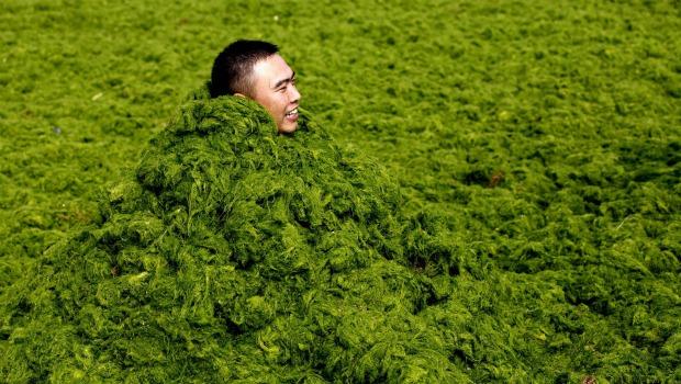 chino sumergido en algas 620350