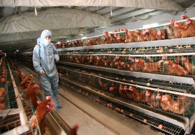 77 H7N9 Bird Flu Cases Confirmed In China