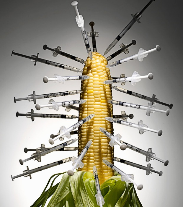 genetically-modified-corn 620+700
