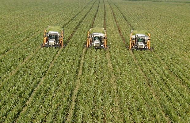 MONO cultivo maiz 620+400