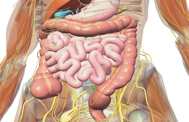 body digestive system 620+400