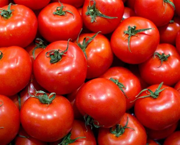 Tomates maduros 620+500