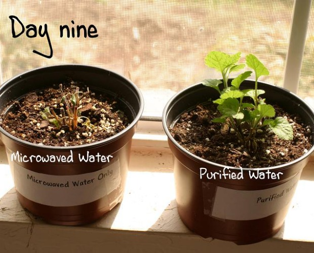 microwaved water in plants 620+500