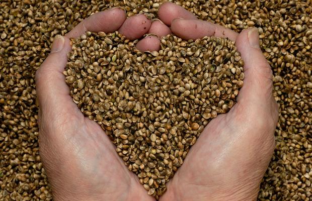 hemp-seeds-hands heart 620+400