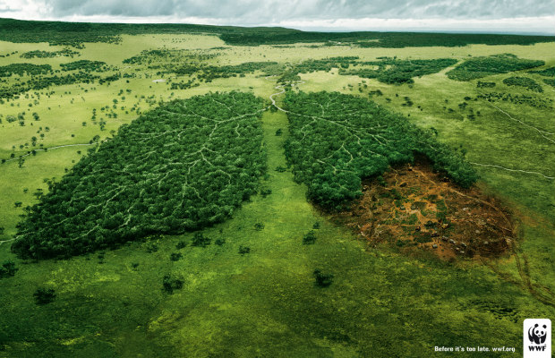 wwf-lungs_2 620+400