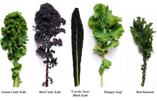 types of kale 620+400